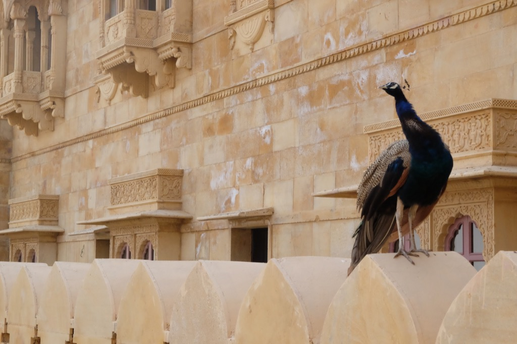 Majestic Rajasthan: Reliving History in Jaipur, Jodhpur and Jaisalmer