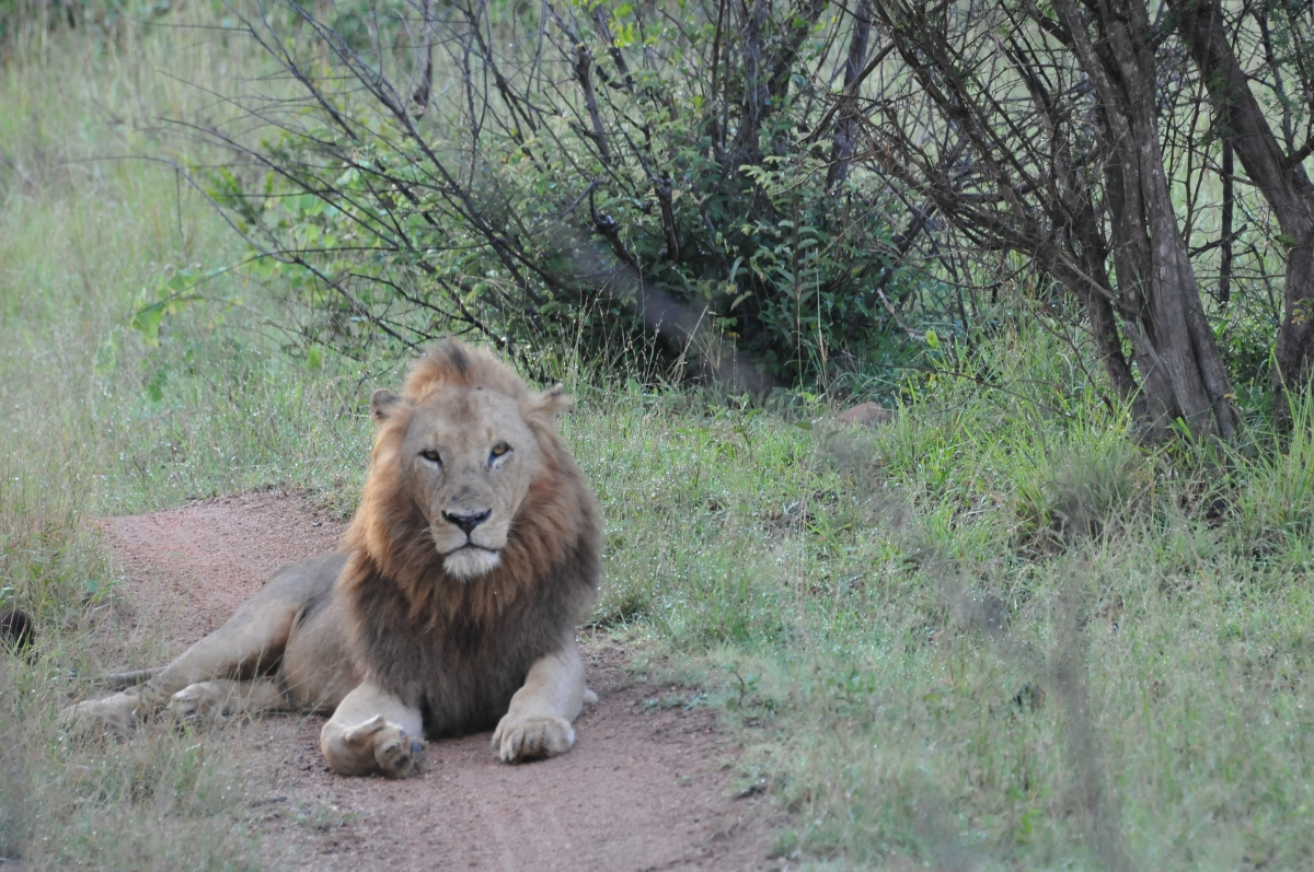 The king and his land - Kruger National Park, South Africa