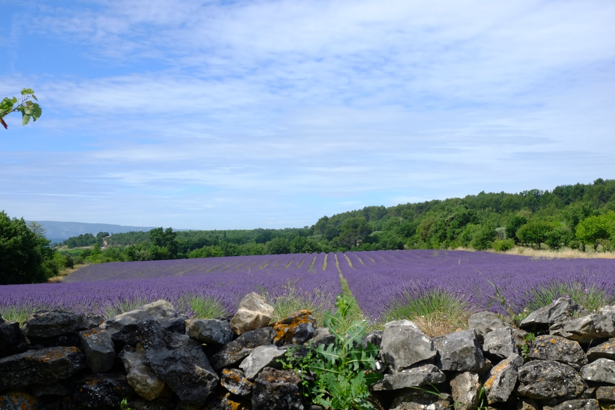 Discover: Provence with family